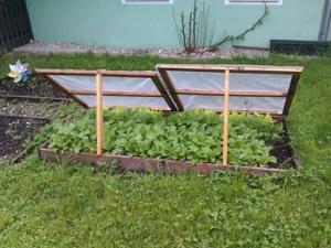 gardening tulsa