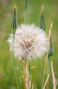 tulsa weed control tips