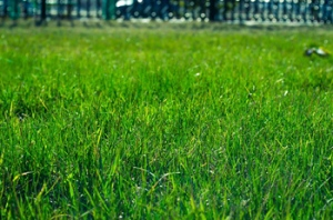 lawn maintenance tulsa