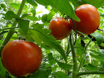 Organic Gardening Tulsa The Best Of Tulsa Lawn Care And