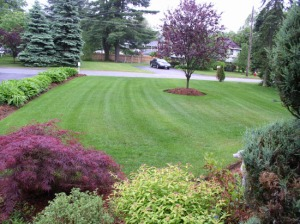 landscaping_services copy